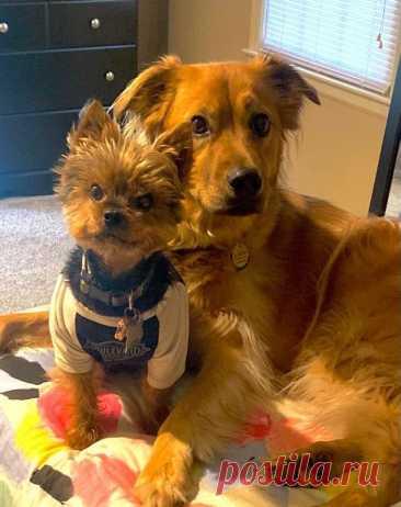 13 фото, которые доказывают, что дружба между собаками существует   Crazydoge   Пульс Mail.ru