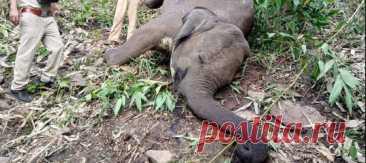 К сожалению, у слонов нет громоотводов.