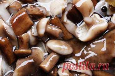 Универсальный и простой маринад для заготовки любых грибов. Рецепт из СССР Вот-вот начнется грибная пора, а в некоторых регионах России она уже в самом разгаре. Маслята, опята, лисички, подберезовики, грузди, подосиновики, рыжики, белые — разнообразие грибов … Читай дальше на сайте. Жми подробнее ➡