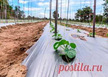 Los suelos mulchirovanie: los materiales para mulchirovaniya