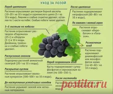 Виноградная лоза не приносит плоды Поможет подкормка | www.agro-sales.ru Агро портал | Яндекс Дзен
