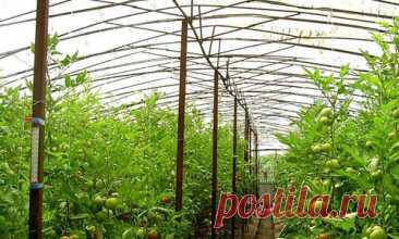 "Clever greenhouses of Yury Tsikov - the head from the book N. Kurdyumova \""My fruitful greenhouse\"""
