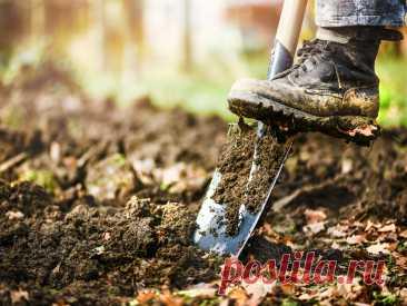 5 осенних работ с почвой, чтобы значительно улучшить её под зиму. Фото — Ботаничка.ru