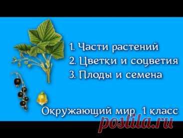 Что общего у цветковых растений? Окружающий мир  1 класс