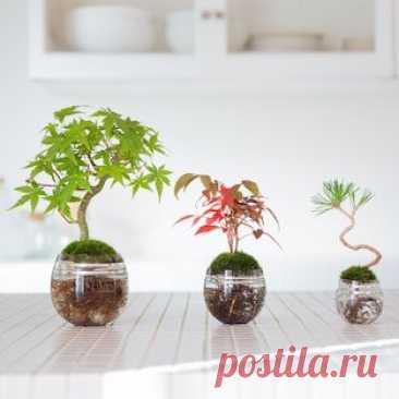 Аква бонсай – современный уникальный стиль ~ Planetalsad