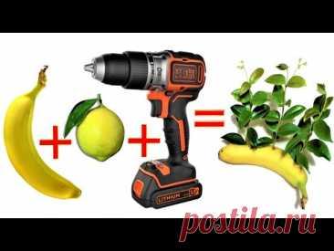 сверните банан и добавьте его в лимон и посмотрите, что получится. результат вас удивит