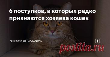 6 поступков, в которых редко признаются хозяева кошек