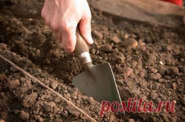 Что сажают под зиму на огороде осенью - список растений