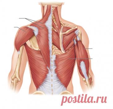 Пассивные упражнения на растяжение для верхних конечностей и плечевого пояса