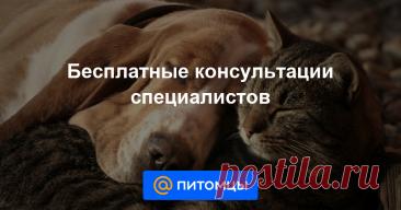 Портал Питомцы Mail.ru Консультация ветеринара и кинолога, собаки и кошки