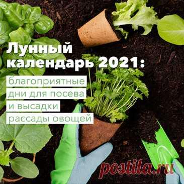 15 ошибок при выращивании рассады, которые мы допускаем чаще всего | Рассада (Огород.ru)