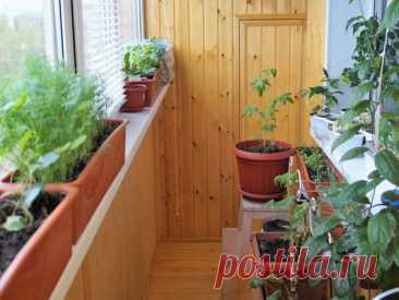 Огород на подоконнике - Огород
