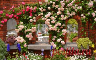 Вьющиеся быстрорастущие многолетние цветы для дачи и сада | 6 соток