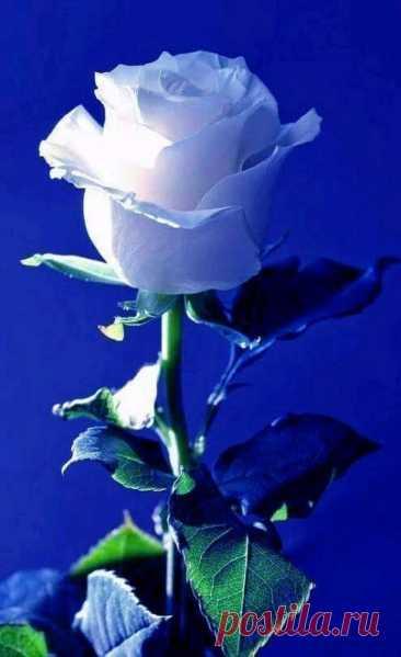 Счастлив тот, кто может восхищаться, а не завидовать...
