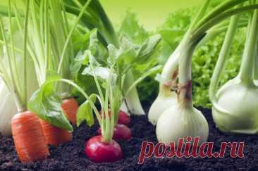 Какие овощные культуры можно сажать под зиму 🚩 Сад и огород