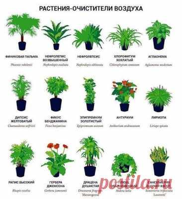 Вот, что нужно выращивать в квартире