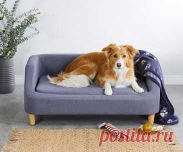 Мебель для животных: немецкая сеть магазинов выпустила линию миниатюрных диванов