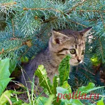 Photo by Котята даром Алматы on September 07, 2021. May be an image of animal and outdoors.
