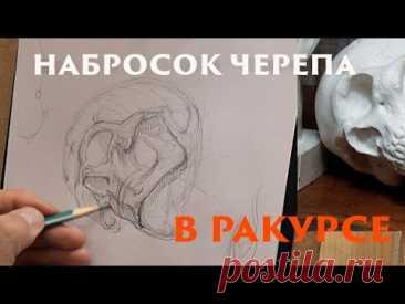 Набросок черепа в ракурсе