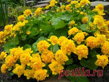 Привлекательные яркие цветы от которых мне невозможно оторвать взгляд | САД | Яндекс Дзен