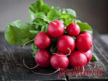 Весенний редис: как вырастить сочные и яркие корнеплоды