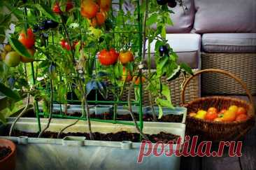 Что можно вырастить на балконе? 6 видов растений, которым нужен лишь горшок | Décor and Design | Яндекс Дзен