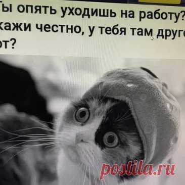 Яндекс.Картинки: поиск похожих изображений