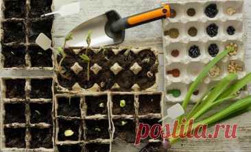 Земля для рассады – как приготовить правильную смесь для молодых растений Рассада томатов, перцев, баклажанов, огурцов и капусты будет крепкой и здоровой, если выращивать ее в правильном субстрате. Будущий урожай рассадных культур напрямую зависит от качества почвы, в котор...