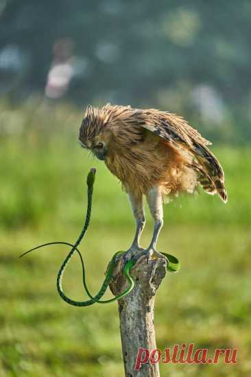 20 редких и смешных фото животных, которые поднимут вам настроение   Российское фото   Яндекс Дзен