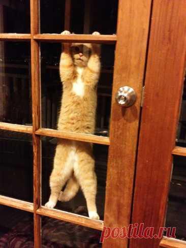 10+ смешных фото животных, которым позарез нужно попасть в дом. Ридус