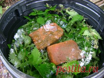 Настой из крапивы и сорняков: рецепт, польза и вред