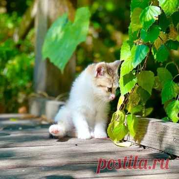 Photo by Котята даром Алматы on September 13, 2021. May be an image of cat and outdoors.