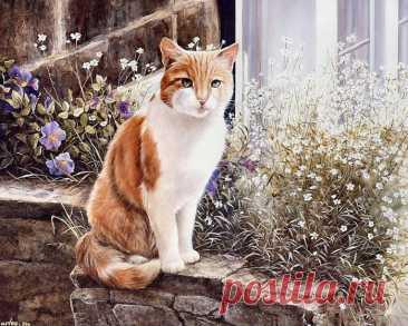 Очаровательные животные на картинах Shirley Deaville