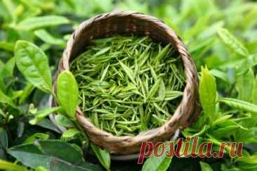 Полезные свойства зеленого чая - Образованная Сова Зеленый чай можно использовать для создания самых разных средств для красоты как волос, так и кожи, поэтому в каждом доме не помешает иметь запас такого природного антиоксиданта. Узнайте, как использовать зеленый чай как средство для шикарных волос и нежной кожи! Шикарные волосы после пакетика зеленого чая Этот рецепт не только избавит Вас от перхоти, но …