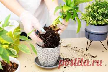 Как и когда пересаживать комнатные растения: всё, что нужно знать