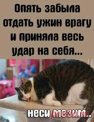 Яндекс.Картинки: поиск по изображению