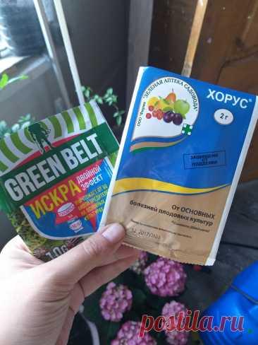 Опрыскивание по зелёному конусу: почему именно оно так важно. Моя краткая шпаргалка по весенним обработками плодовых деревьев | Росток🌷: заметки садовода | Яндекс Дзен