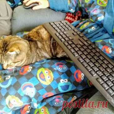 20 котиков-помощников, которые сделали столько всего полезного для своих хозяев Вопреки расхожему мнению, кошка умеет не только жрать, спать и ластиться. Точнее, она умеет делать все это с пользой! И для себя, и даже немножко для хозяев. В конце-концов, люди они неплохие, много х...