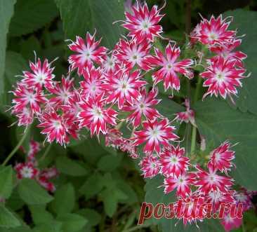 Что я делаю для стимулирования цветения «рыцарской звезды». И это всегда работает В названии ярко цветущего комнатного растения гиппеаструма присутствует греческая основа. «Хиппеос» переводится как рыцарь, а «астрон» — это звезда. Поэтому луковичное растение с удивительными по красоте воронкообразными бутонами часто называют «рыцарской звездой». Иногда требуется принимать меры, чтобы экзот... Читай дальше на сайте. Жми подробнее ➡