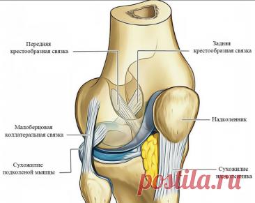 Как лишний вес сказывается на ваших коленях. 3 Простые упражнения для укрепления сустава. | health and beauty | Яндекс Дзен