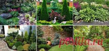 6 идей как сделать яркими тенистые уголки сада! | ДОМ ЯРКИХ ИДЕЙ | Яндекс Дзен