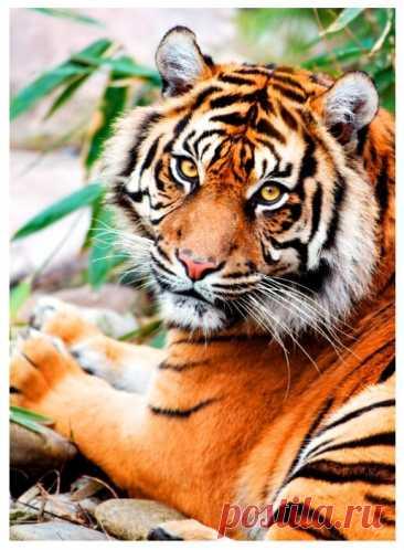 Картина по номерам 40x50 Paintboy Благородный тигр — купить по выгодной цене на Яндекс.Маркете Картина по номерам 40x50 Paintboy Благородный тигр — купить сегодня c доставкой и гарантией по выгодной цене. 1 предложение в проверенных магазинах. Картина по номерам 40x50 Paintboy Благородный тигр: характеристики, фото, магазины поблизости на карте. Достоинства и недостатки модели — Картина по номерам 40x50 Paintboy Благородный тигр в отзывах покупателей, обзорах, видео и обсуждениях.