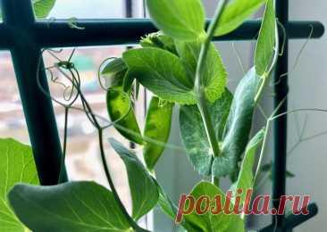 Огород на подоконнике: что посадить и как вырастить — Стиль жизни — 21.11.20 — Агентство ТВ-2 — актуальные новости в Томске сегодня