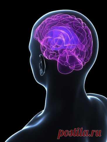 Чем заменить таблетки для улучшения работы мозга Ноотропы — это препараты для стимуляции умственной деятельности. Но так ли они эффективны, как нам хотелось бы? Нейробиологи предлагают полезную альтернативу этой группе медикаментов для поддержания ф...