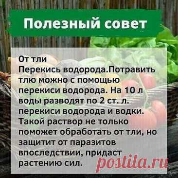 Идеи для сада и огорода своими руками с фото | Группа на OK.ru | Вступай, читай, общайся в Одноклассниках!