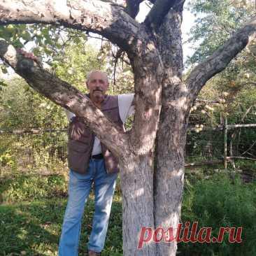 Мой земляк-виноградарь рассказывает о своем опыте и о том, с чего стоит начать новичку | Кинельский виноград | Яндекс Дзен