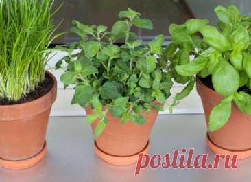 Огород в квартире: какие овощи и зелень можно посадить на подоконнике осенью