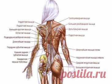 Освобождаем спину от зажимов! ТОП-3 лучших упражнения для растяжки мышц - Жизнь планеты  Освобождаем спину от зажимов! ТОП-3 лучших упражнения для растяжки мышц РАСТЯЖКА спины необычайно важна по ряду причин. Во-первых, большинство людей ведут малоподвижный образ жизни и имеют сидячую работу. Это …