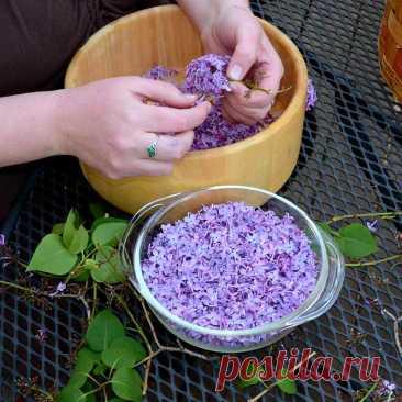 El color de la lila
