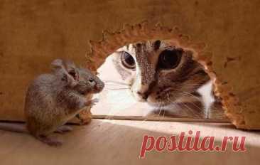 Как я избавился от мышей в доме? - рабочий способ, которым поделился со мной охотник | БЛОГ СТРОИТЕЛЯ | Яндекс Дзен